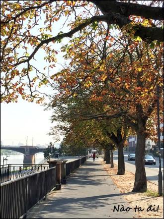 frankfurt-autumntree